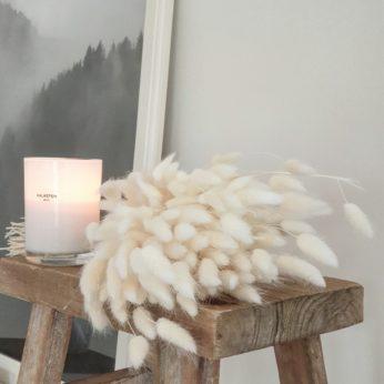 Trockenblumen – Lagurus Weiß