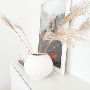 Trockenblumen – Gras Miscanthus Natur