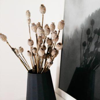 Trockenblumen- Mohn