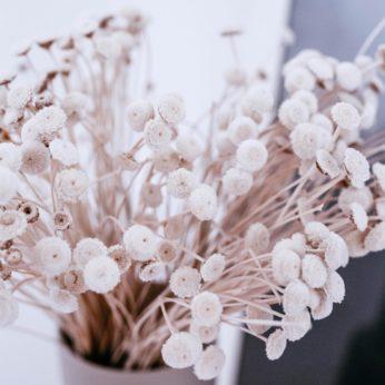 Trockenblumen – Botao Branco